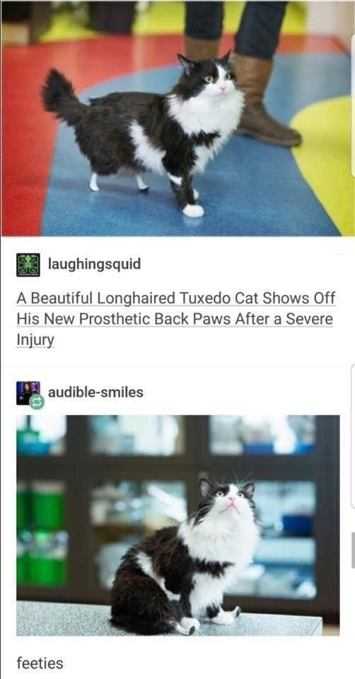 Make Your Caturday Even Better With These Funny Cat Memes - Cat Memes ...