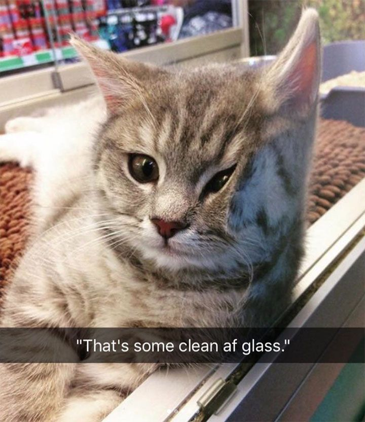 24 funny animal pictures that you really only have to see for yourself - #an ...