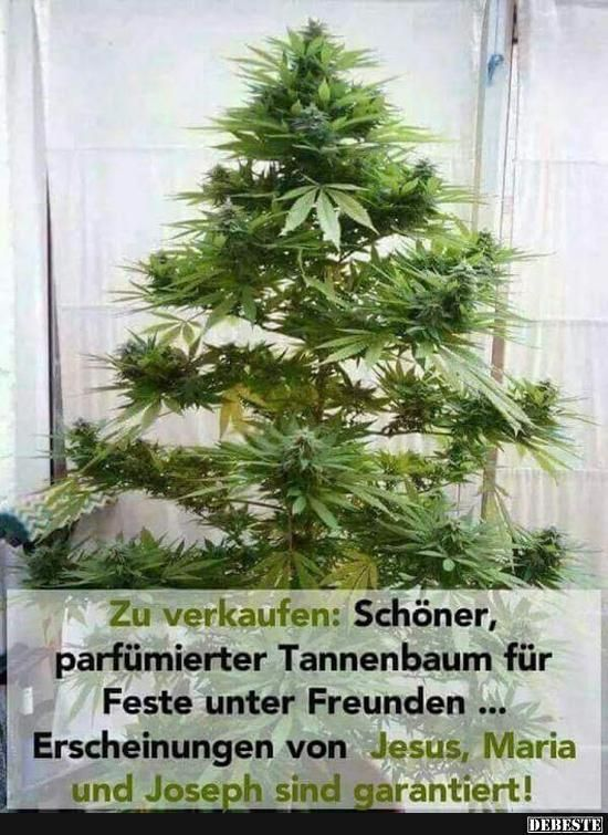 For sale: Beautiful, perfumed Christmas tree .. | Funny pictures, sayings, words ...