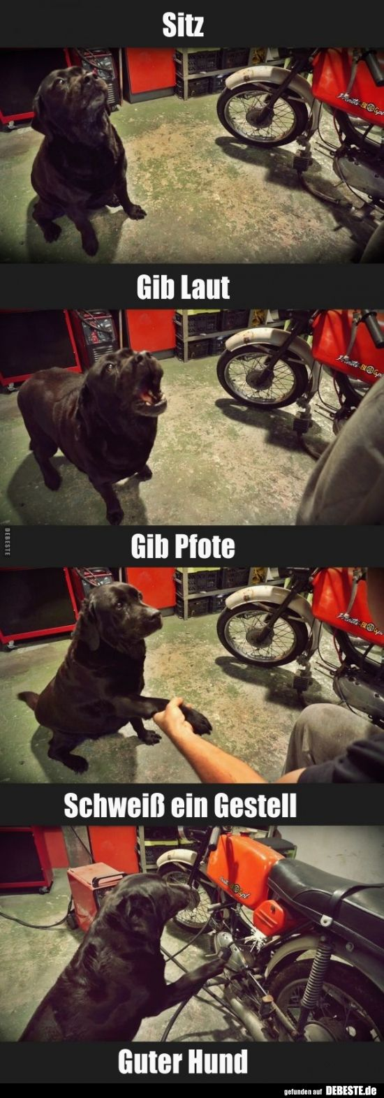 Seat / Give Loud / Give paw ..   Funny pictures, sayings, jokes, really funny